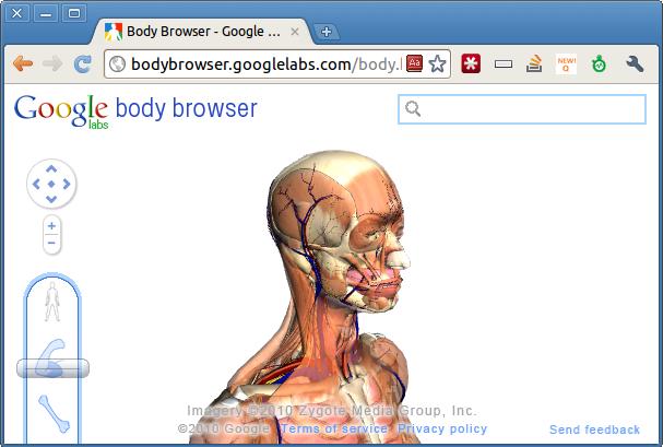 Google Body Browser Web Moves Blog